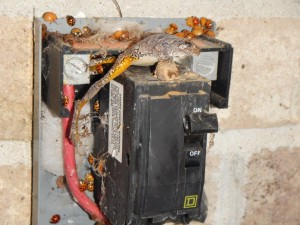Frog on Electrical disconnect 11-1-15